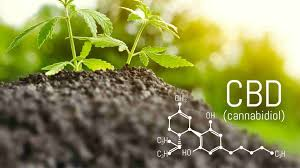 Understand The Basic Concept Of Using CBD Product