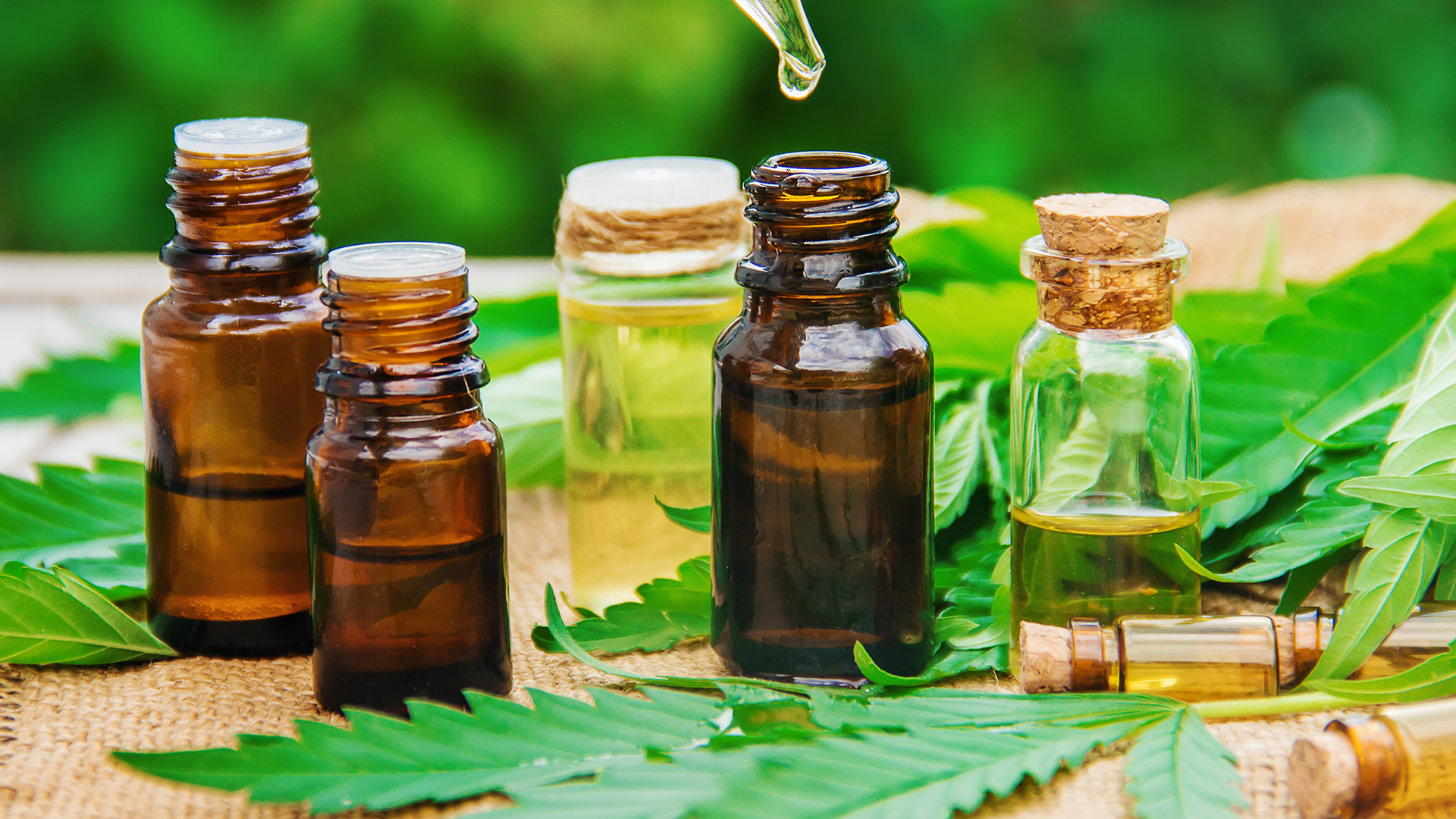 Major Well being Benefits of CBD or CBD Oil